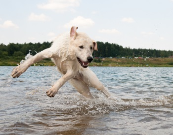 hond in water